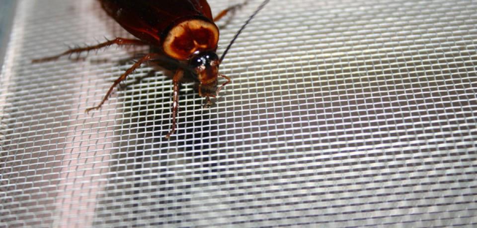 Garść metod na pozbycie sie owadów z mieszkania